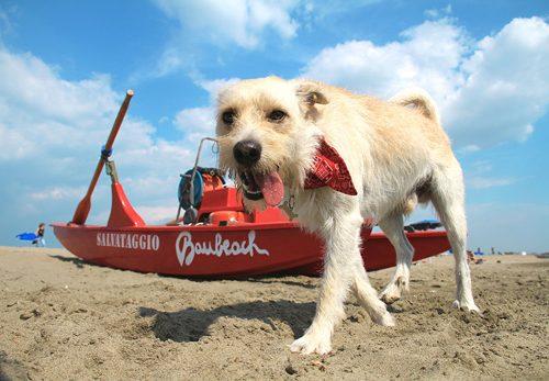 BAUBEACH®, la spiaggia per gli amici più fedeli: si riparte in armonia e voltando pagina!                      La Bellezza non salverà il mondo se noi non salveremo la Bellezza!